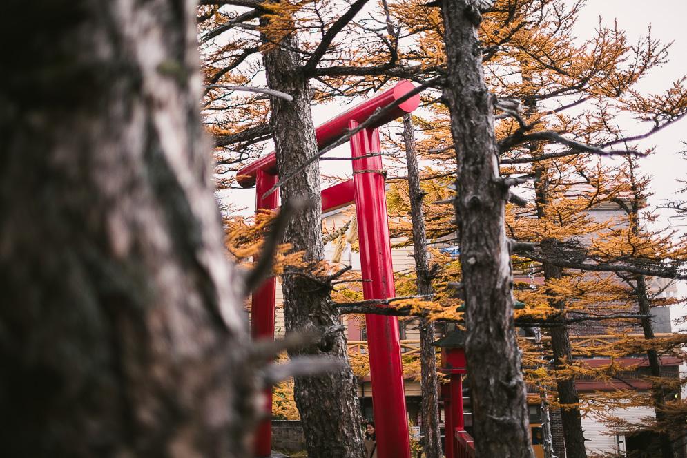 Momiji Japan im Herbst, Reisefotografie, fuji san