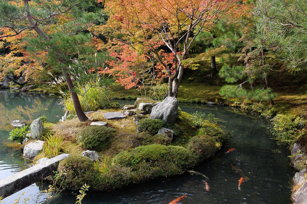 Momiji Japan im Herbst, Reisefotografie, kyoto