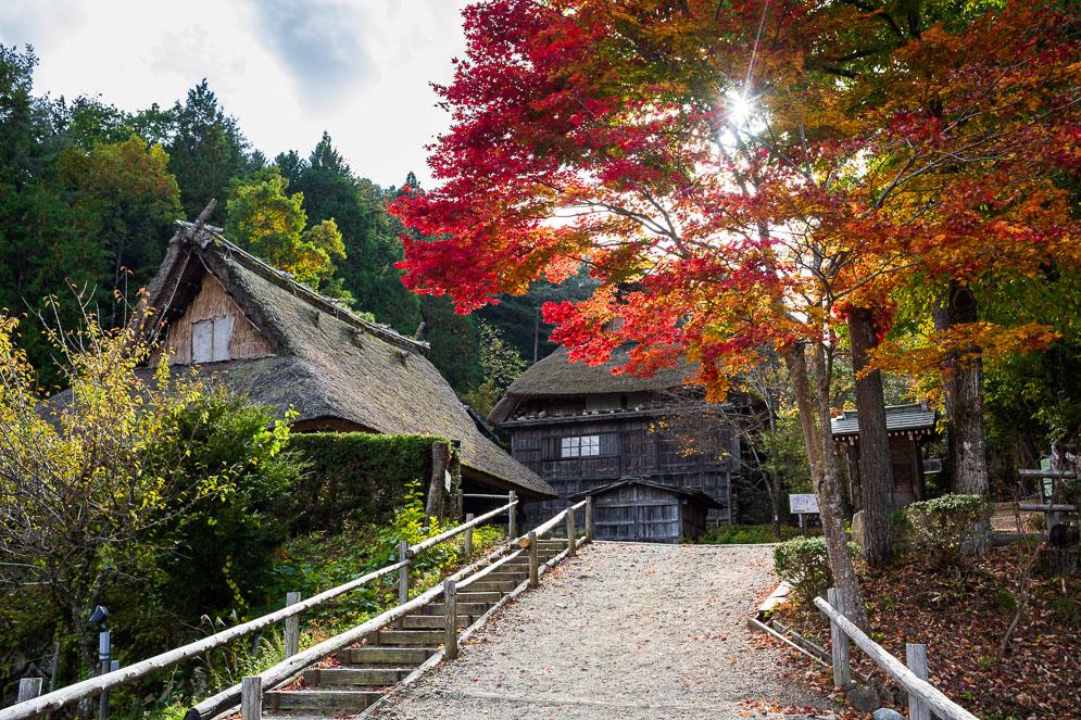 Momiji Japan im Herbst, Reisefotografie, takayama