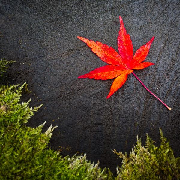 Momiji - Japan im Herbst